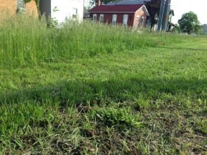 Before and after photo as city cuts grass in public boulevard